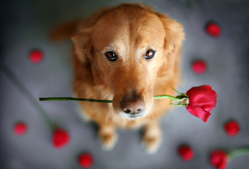 """Happy Valentine's day"" - Photo : Jessica Trinh"