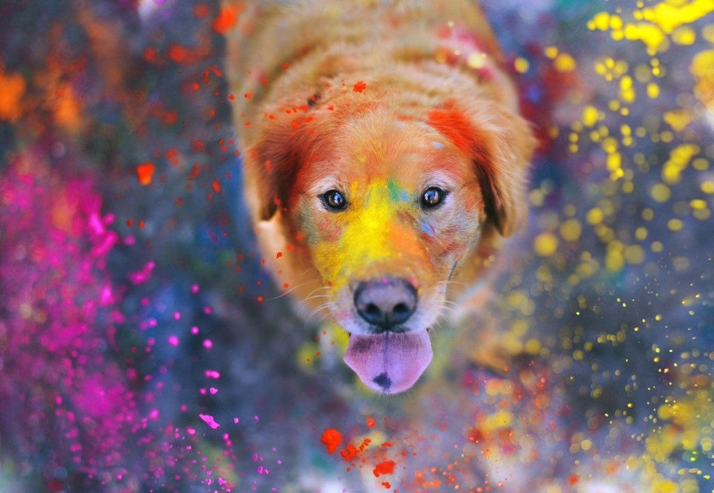 """The explosion of colors"" - Photo : Jessica Trinh"