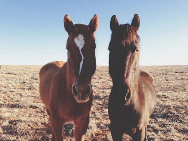 Les amis chevaux - Photo: Kevin Russ