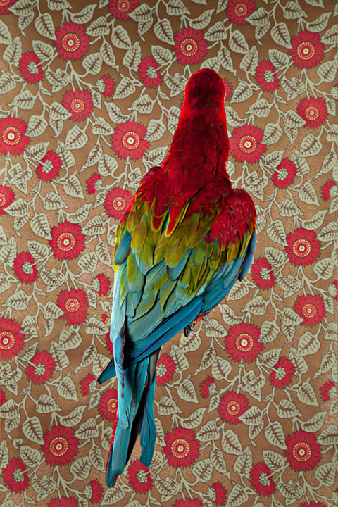 """""""Birds of a Feather"""" - Claire Rosen"""