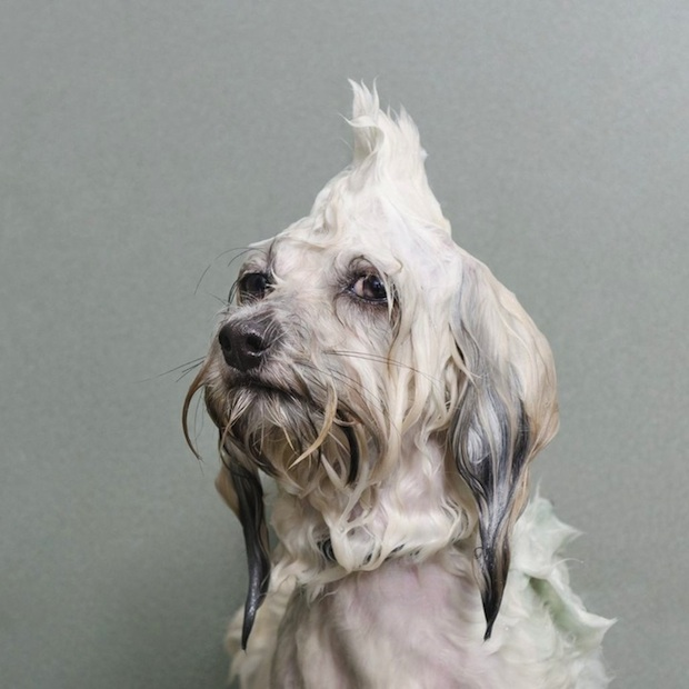 Wet Dog - Sophie Gamand