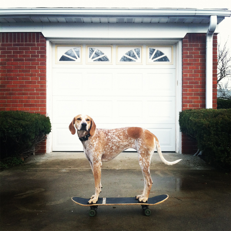 Maddie the Coonhound - Theron Humphrey