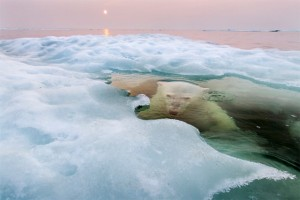 National Geographic Photo Contest 2013 05