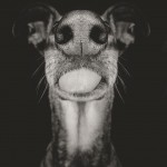 Photo : Elke Vogelsang