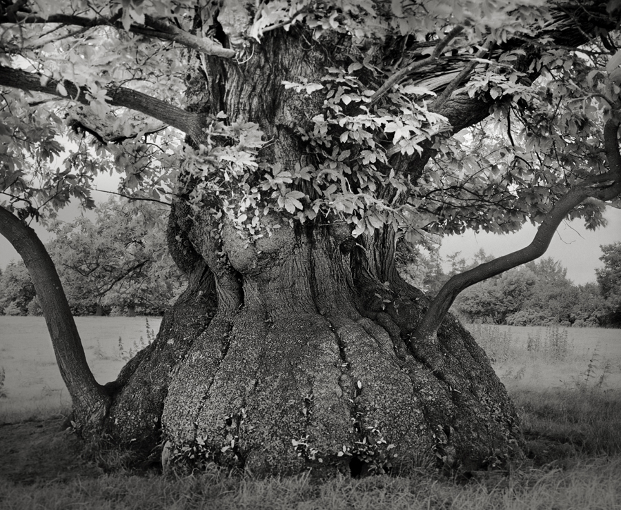 Croft Chestnut - Photo : Beth Moon