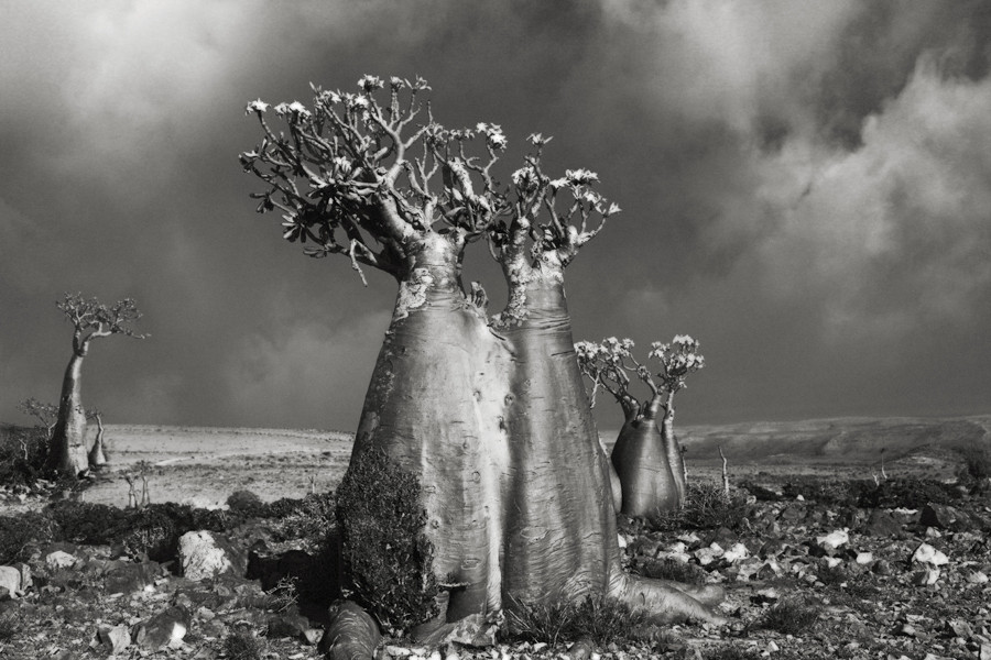 Desert rose (Wadi Fa Lang) - Photo : Beth Moon