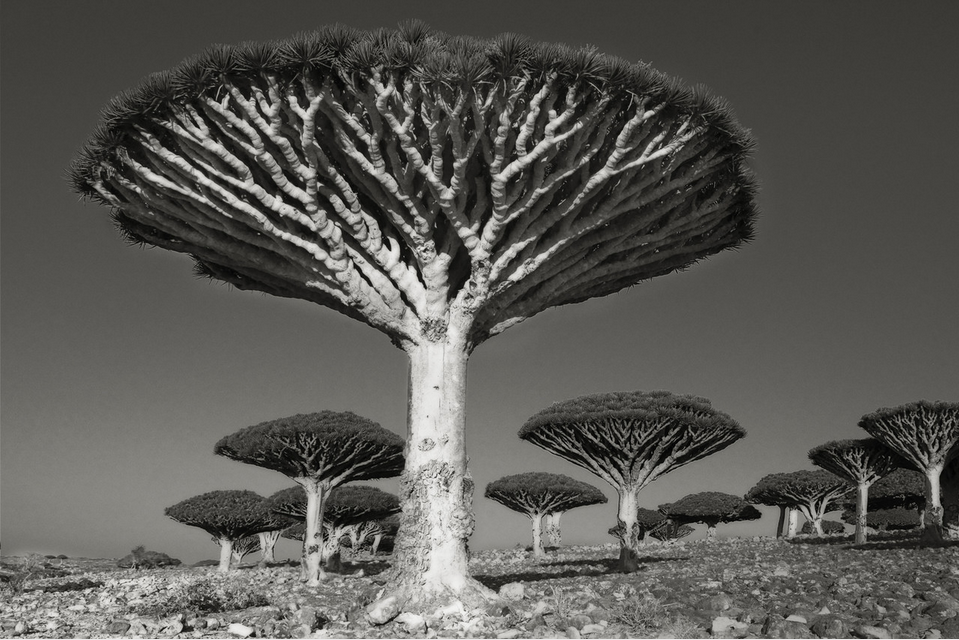 Diksom Forest - Photo : Beth Moon