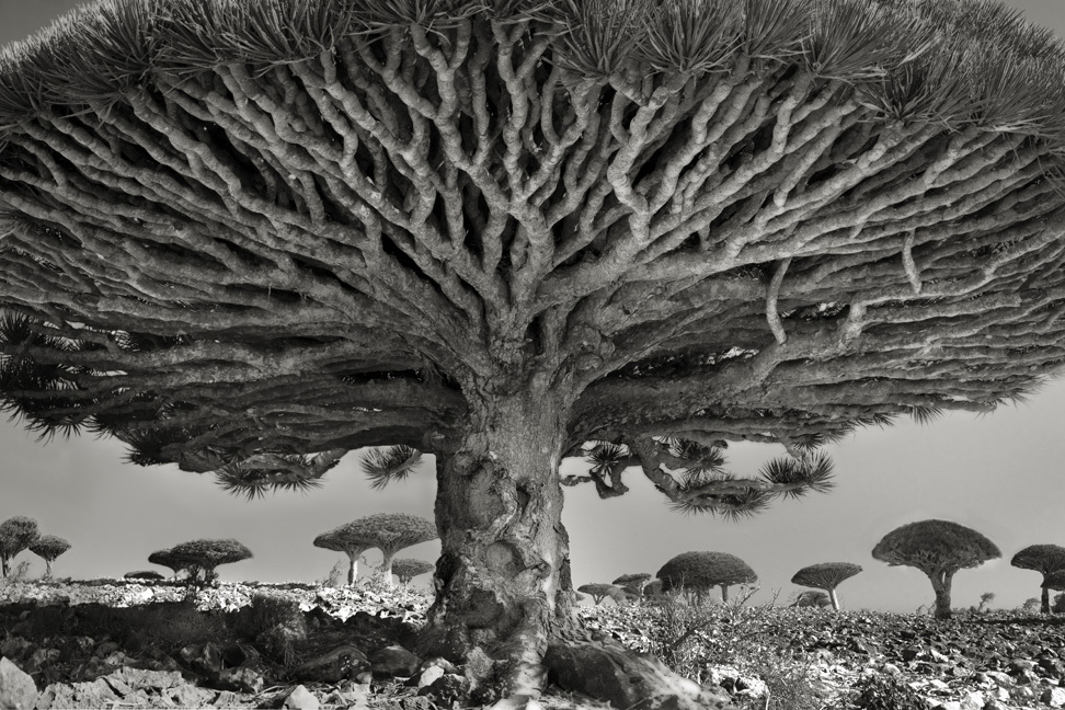 Heart of the Dragon - Photo : Beth Moon