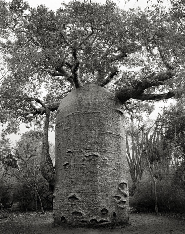 Ifaty Teapot - Photo : Beth Moon
