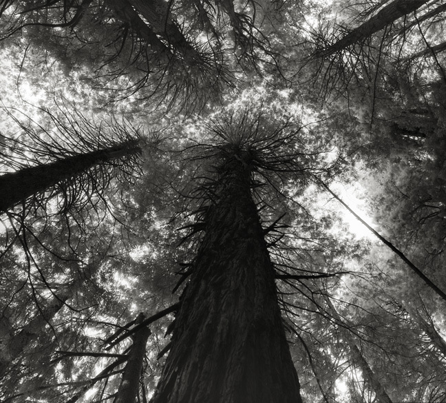 Kings Canyon Sequoias - Photo : Beth Moon
