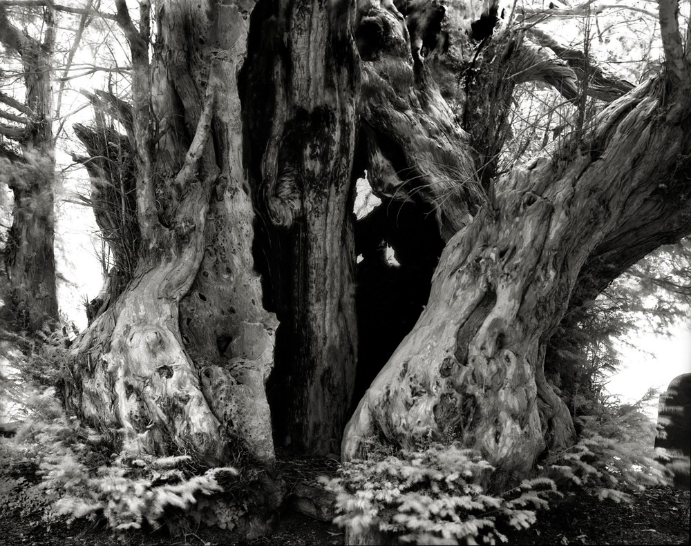 Linton Yew - Photo : Beth Moon