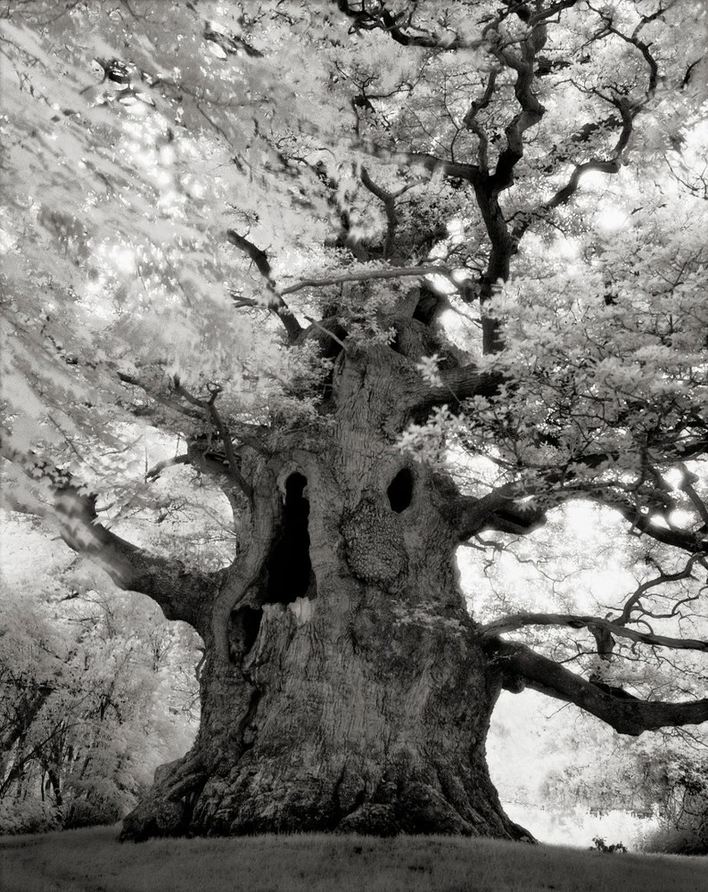 Majesty - Photo : Beth Moon