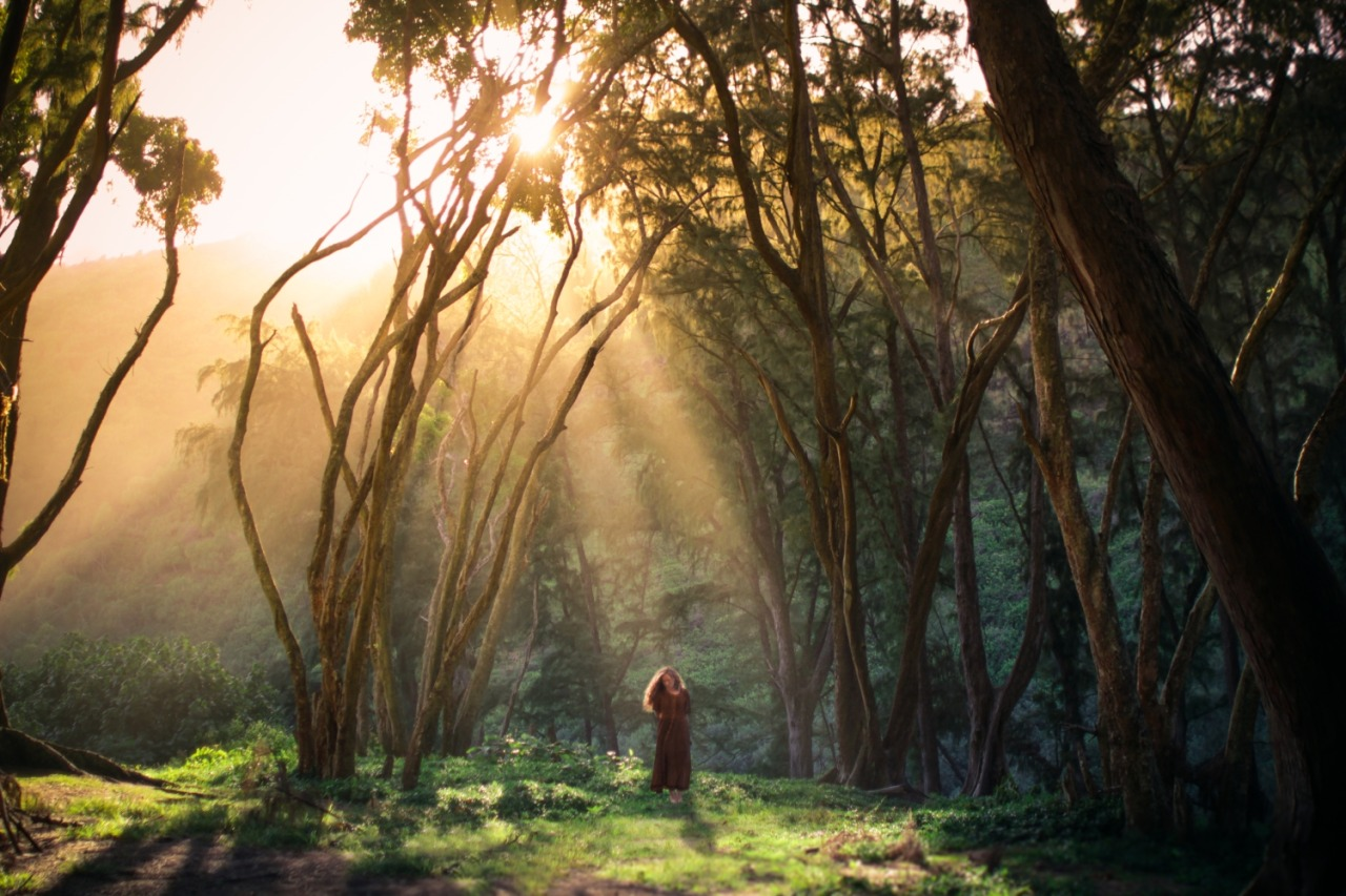 The Golden Hour - Photo : Elizabeth Gadd