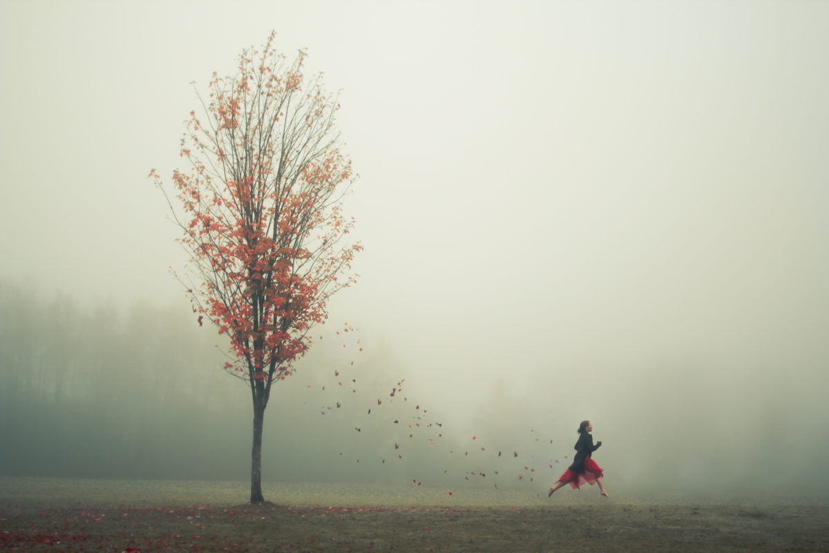 The Leaf Thief - Photo : Elizabeth Gadd
