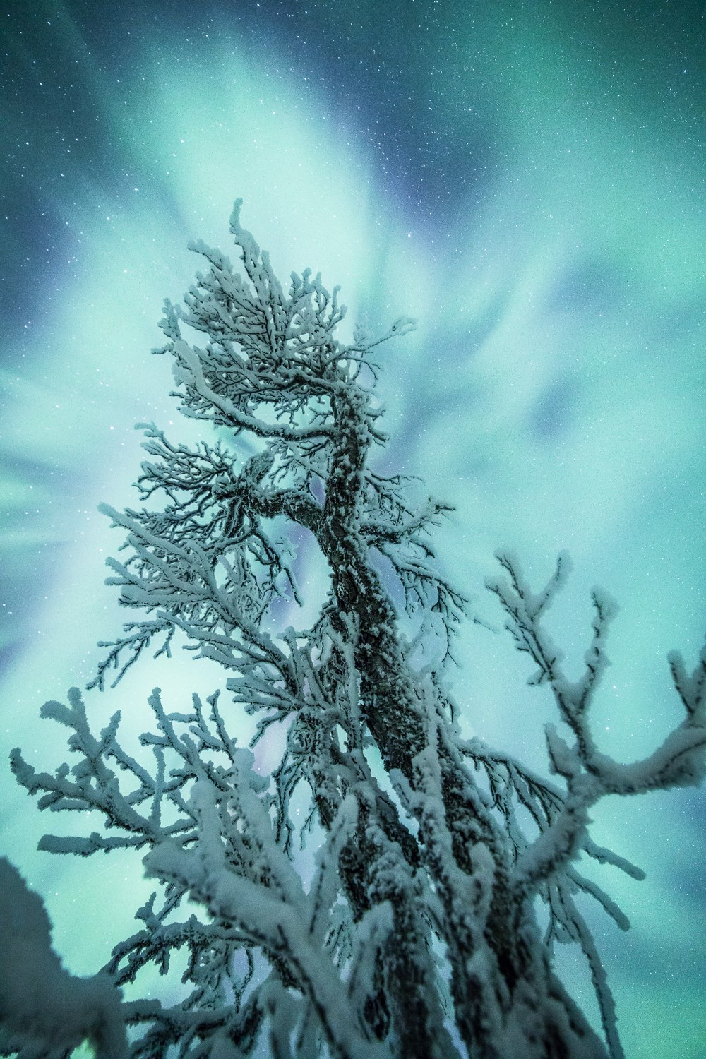 Freezing Tree - Photo : Check My Dream