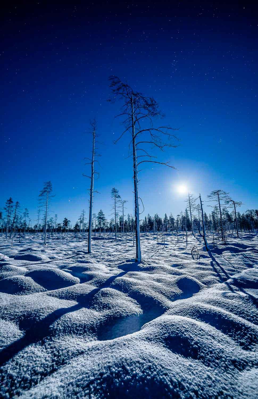 Snowy Moon VII - Photo : Check My Dream