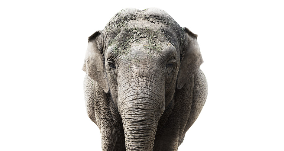 Elephant Photo : Morten Koldby