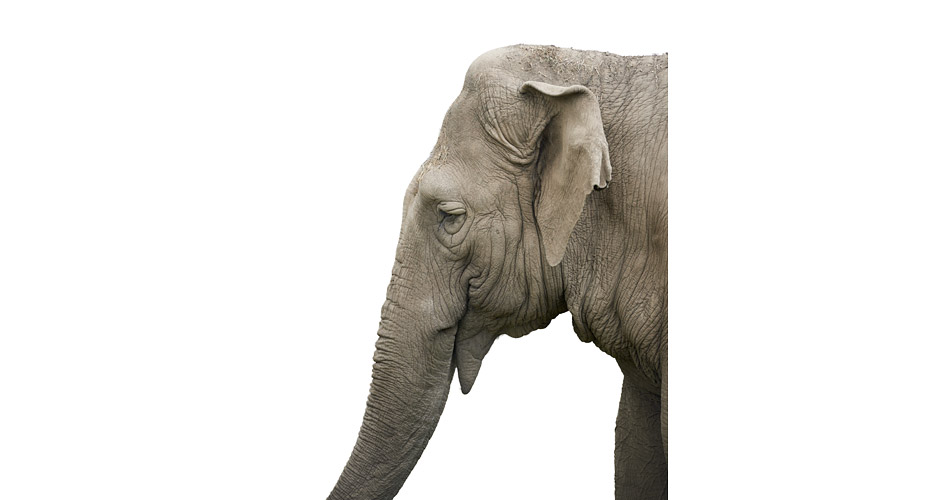Elephant Photo : Morten Koldby pour WWF Together App