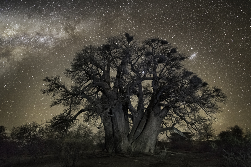 Aludra Photo : Beth Moon