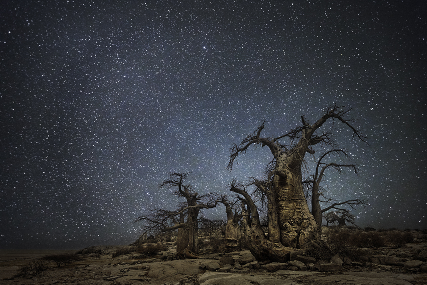 Ara Photo : Beth Moon