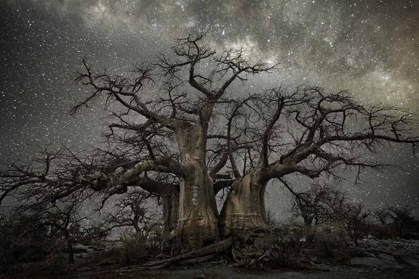 Fornax Photo : Beth Moon