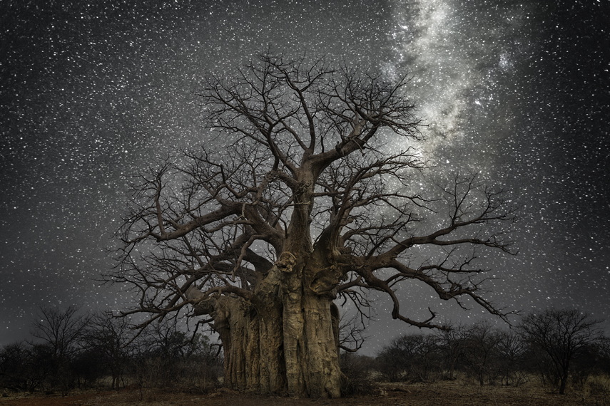 Lacerta Photo : Beth Moon