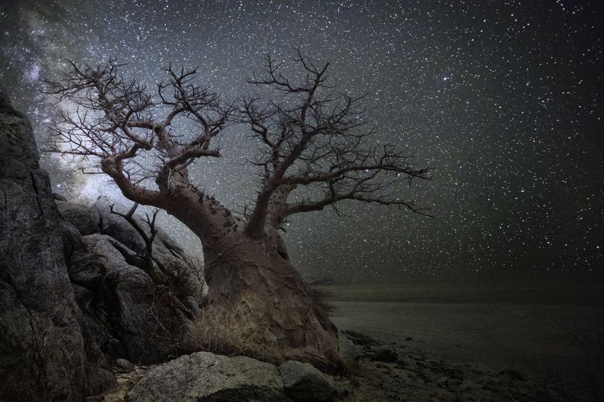 Lyra Photo : Beth Moon