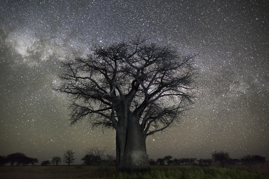 Polaris Photo : Beth Moon