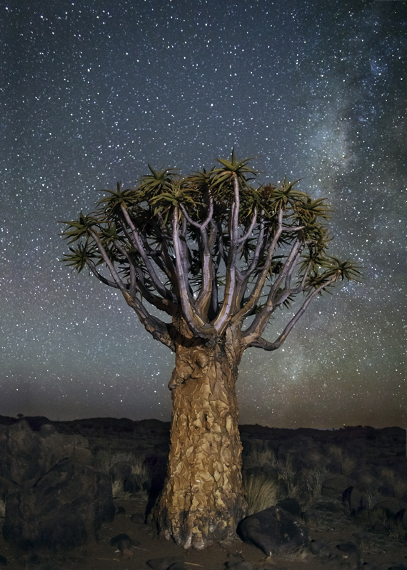 Serpens Photo : Beth Moon