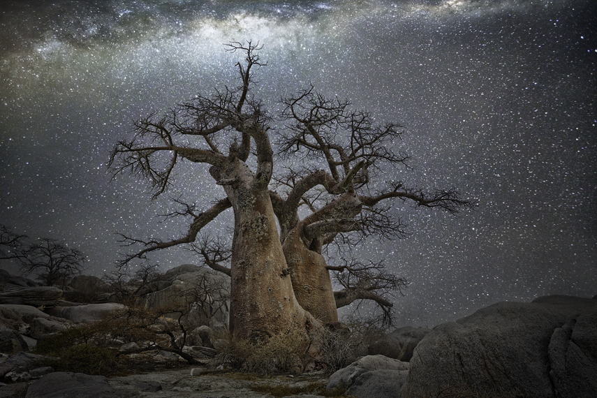 Vela Photo : Beth Moon