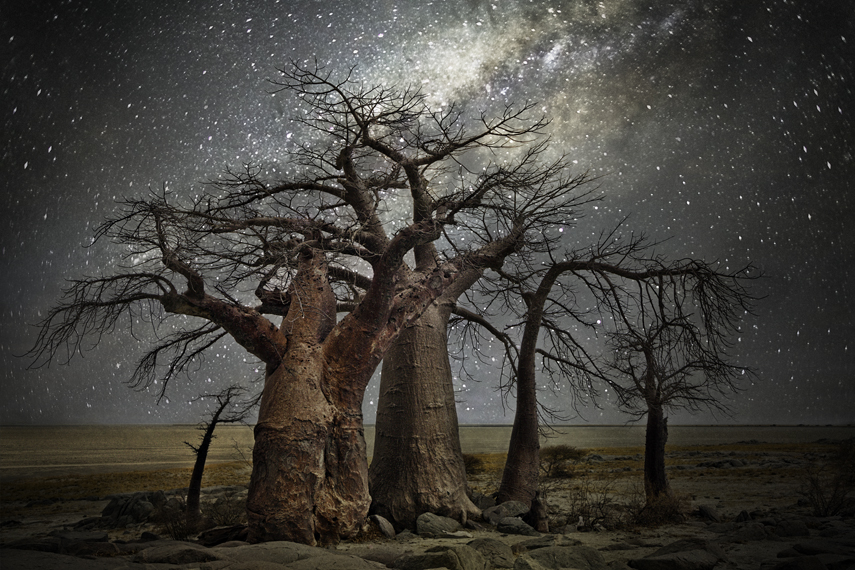Volans Photo : Beth Moon