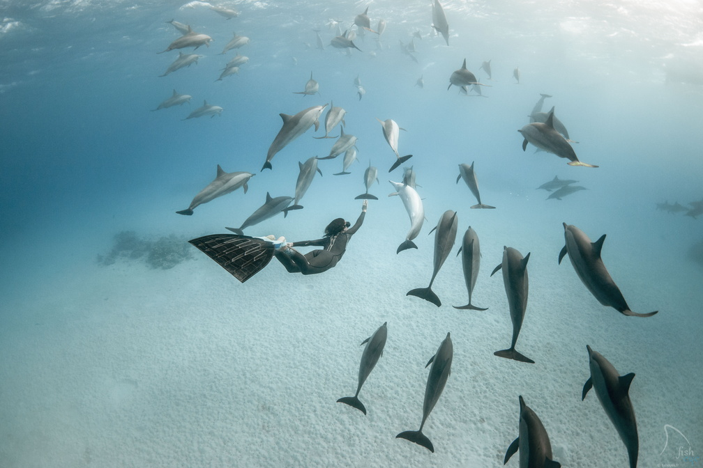 Photo : Alex Voyer & Alex Roubaud - Fisheye - dauphins dolphins