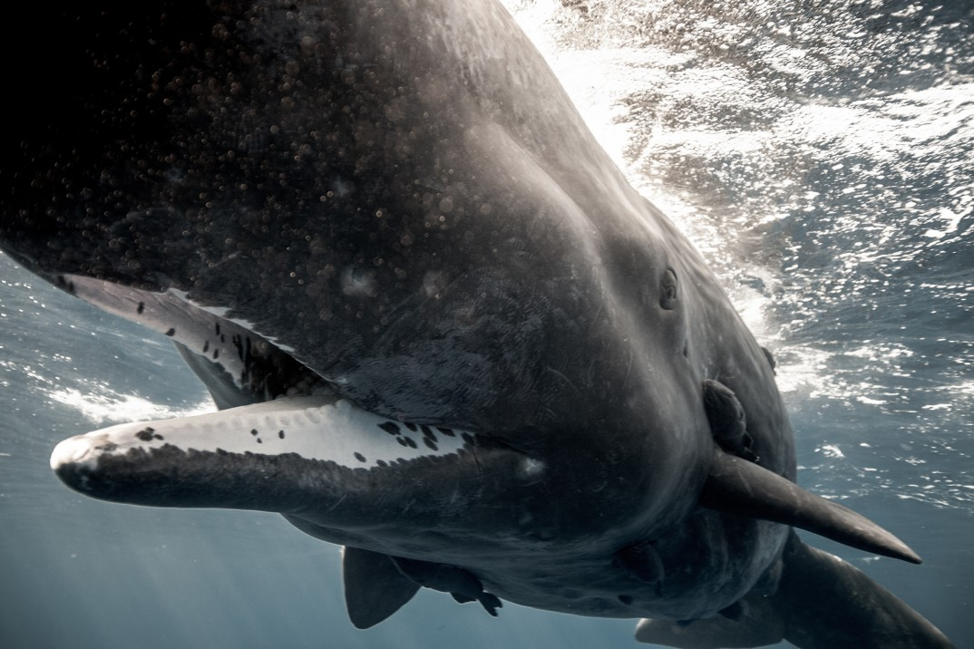 Photo : Alex Voyer & Alex Roubaud - Fisheye - whale baleine