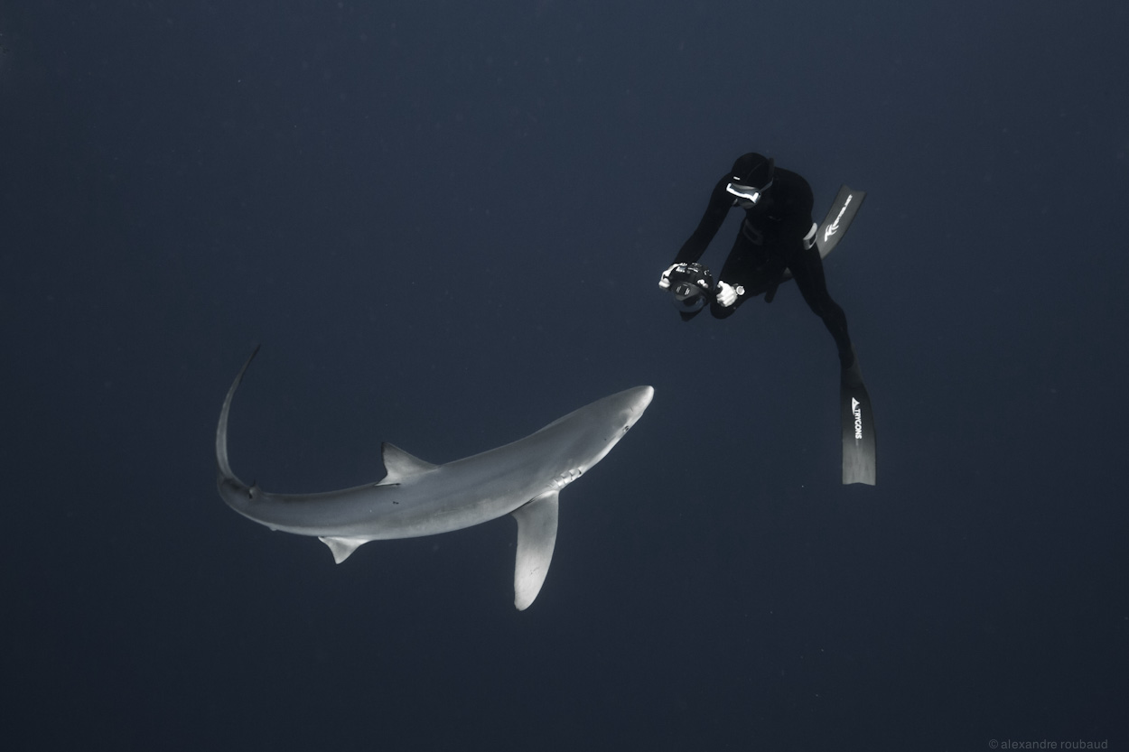 Photo : Alex Voyer & Alex Roubaud - Fisheye - requins sharks