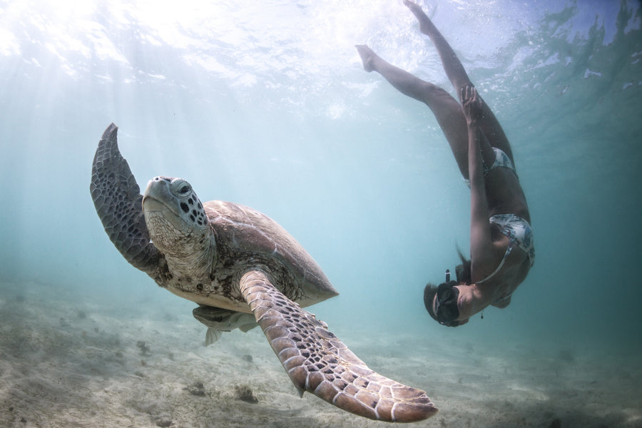 Photo : Alex Voyer & Alex Roubaud - Fisheye - tortue turtle