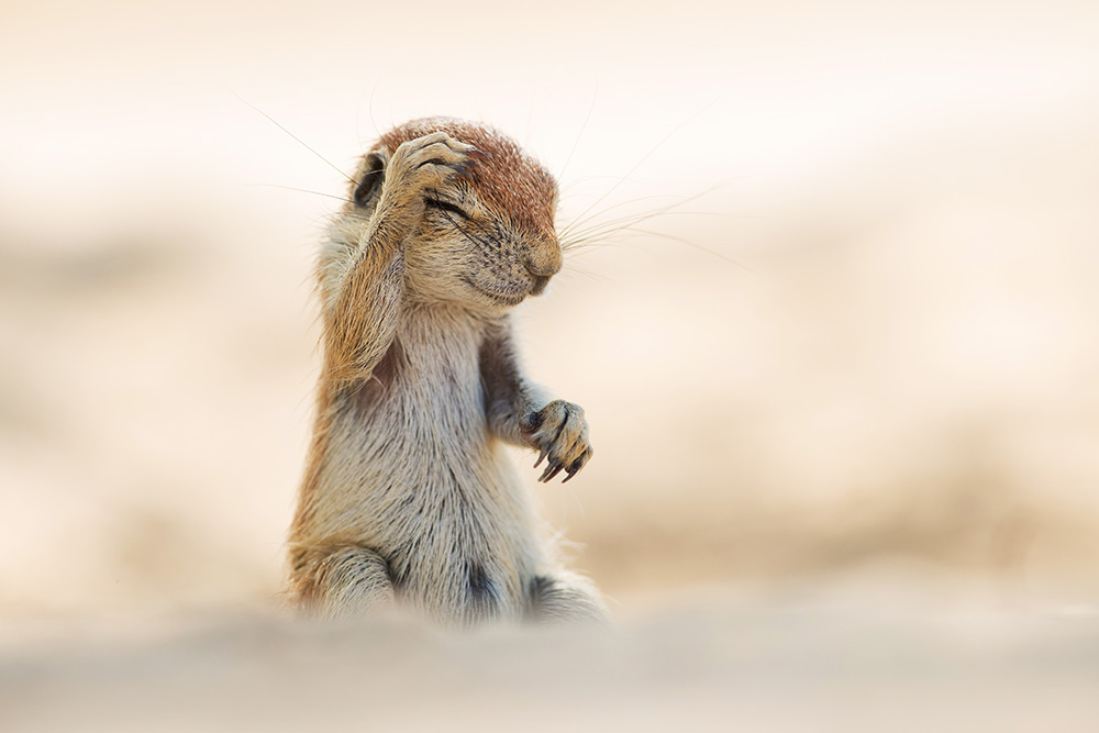 Photo : Yuzuru Masuda - Comedy Wildlife Photography Awards