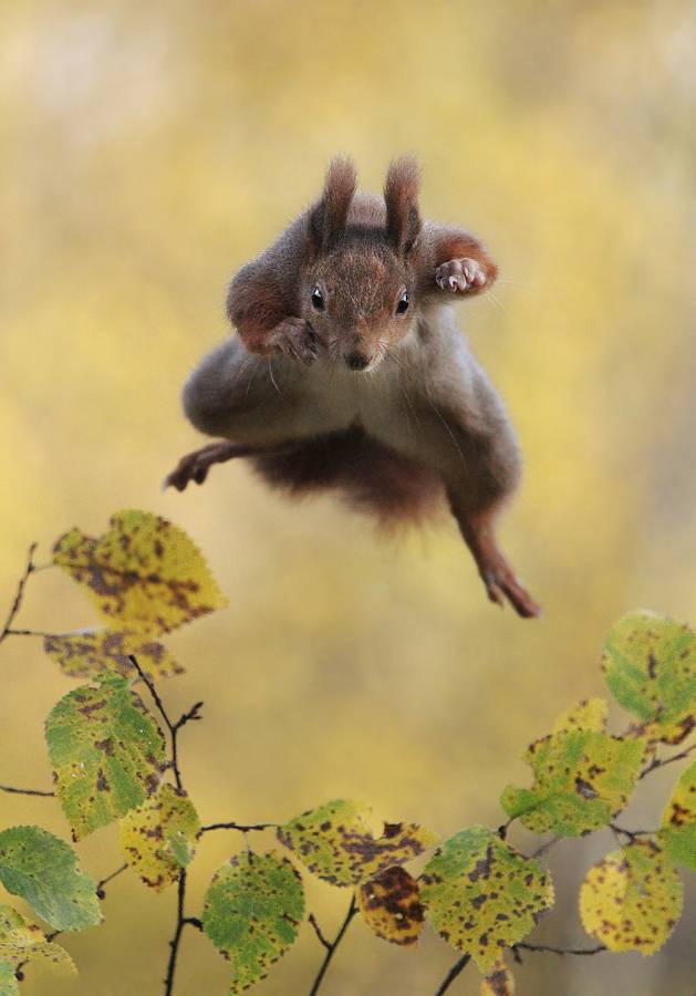 Photo : Julian Rad - Comedy Wildlife Photography Awards