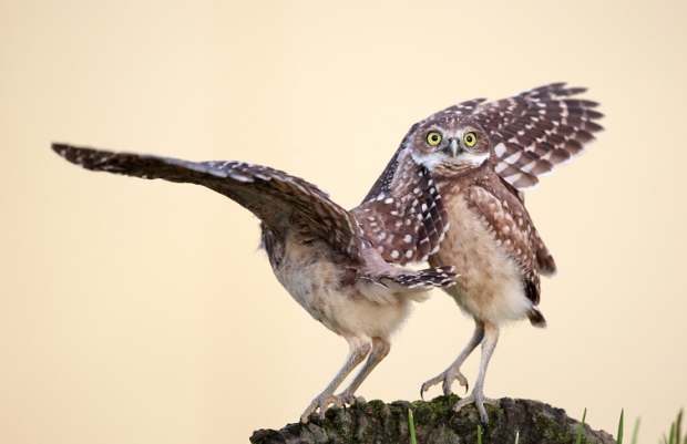 Photo : Megan Lorenz - Comedy Wildlife Photography Awards