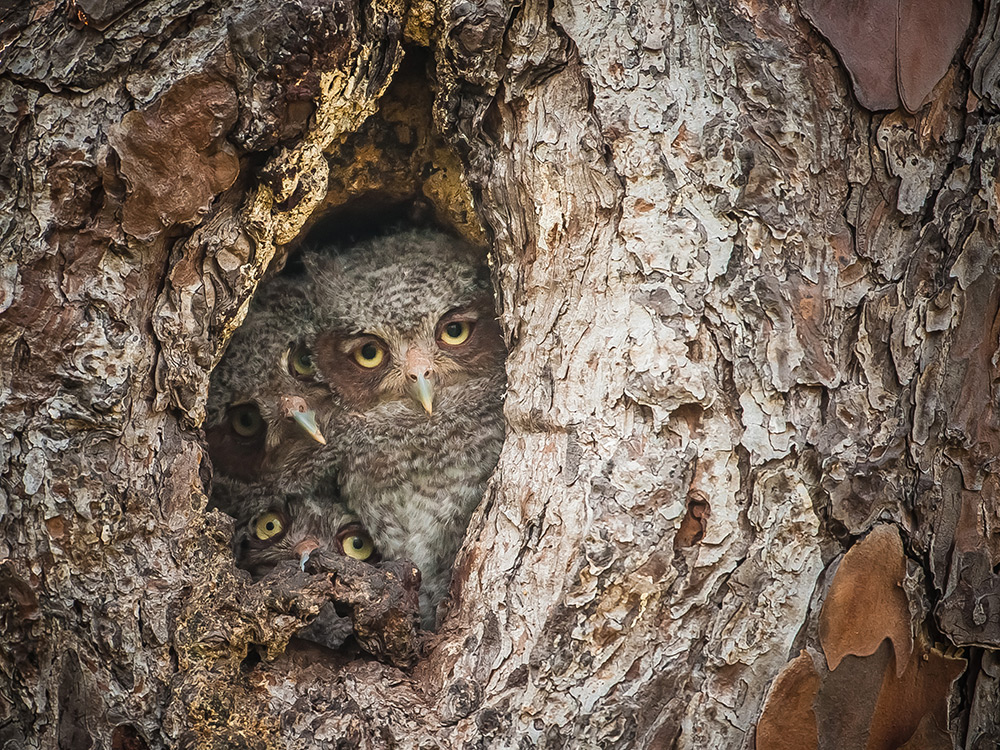 Photo : Graham McGeorge - Comedy Wildlife Photography Awards