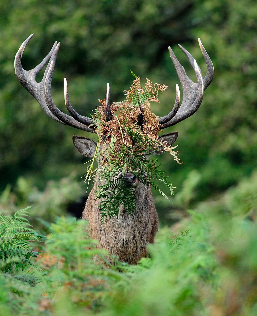 Photo : William Richardson - Comedy Wildlife Photography Awards