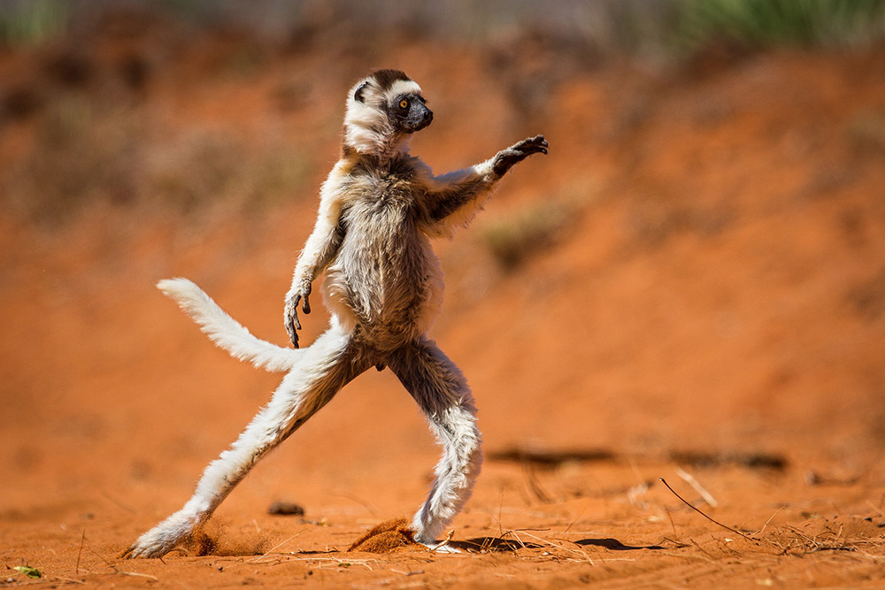 Photo : Alison Buttigieg - Comedy Wildlife Photography Awards