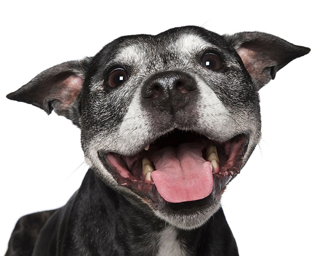 Photo : Alex Cearns / Houndstooth - Happy Pooch Face