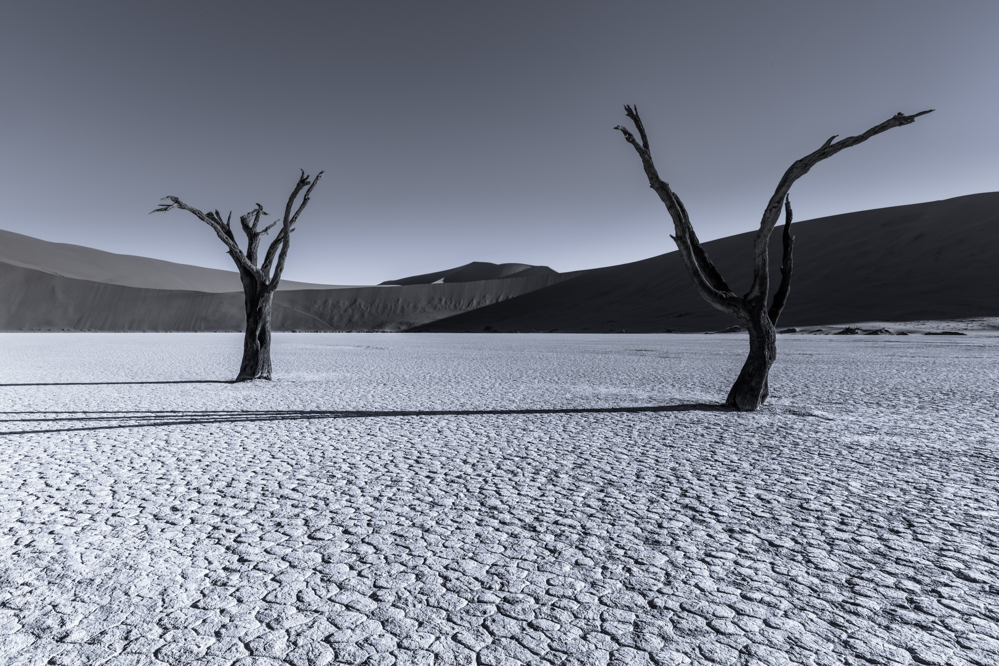Grey Matters(s) Namibia - Distraction par Tom Jacobi