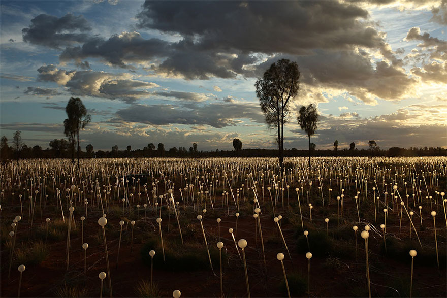 surreal-light-installations-field-of-light-bruce-munro-uluru-australia-3