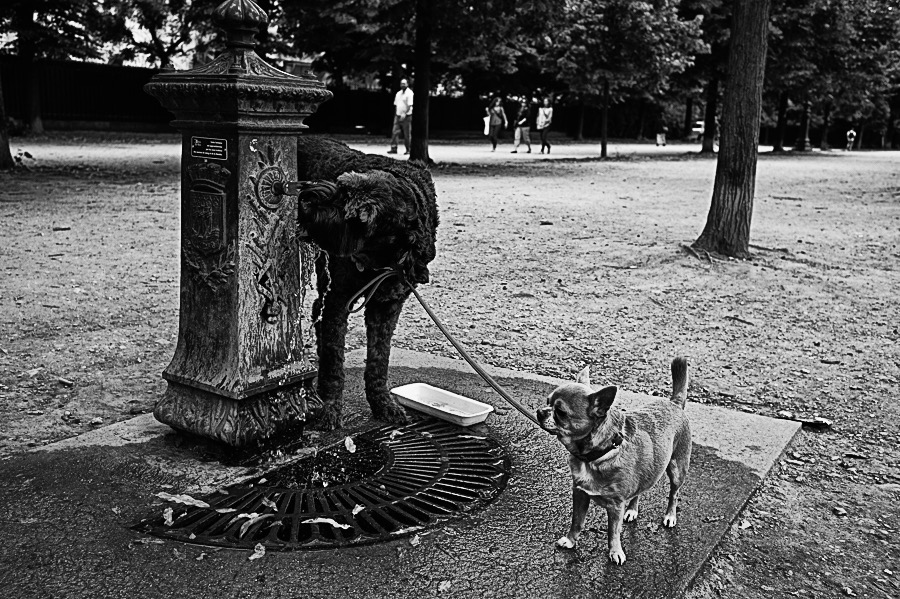Photo : Dogs, Vladimir Dachevski