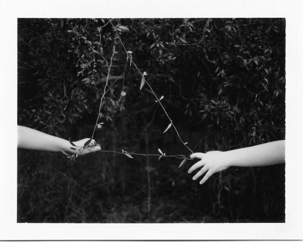 the-triangle-stories-of-yellow-jasmine-2016 The arc of summer, Jen Ervin