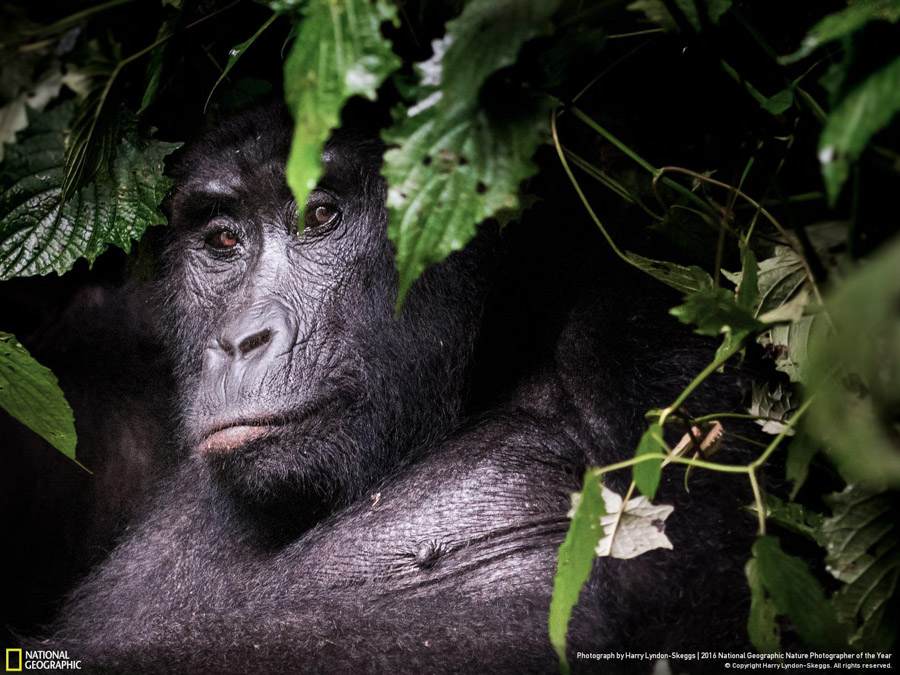 National Geographic Nature Photographer of the Year 2016 - Portraits d'animaux