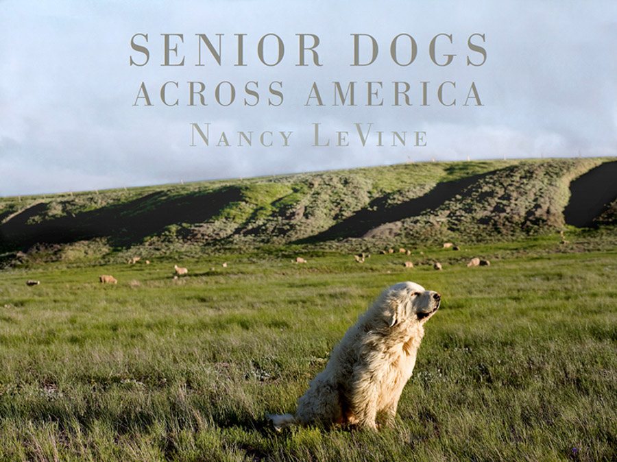 Nancy Levine - Senior Dogs Across America