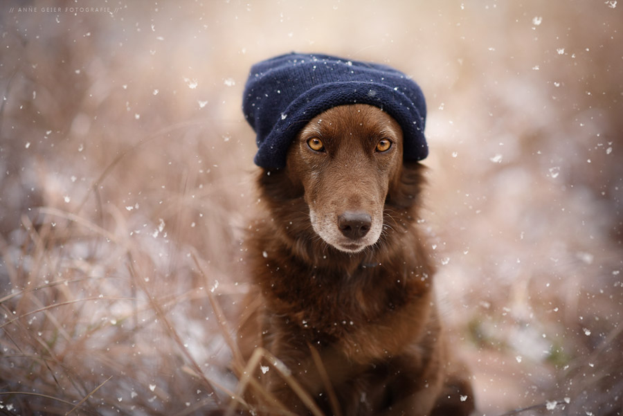 Photo : Portraits de chiens - Anne Geier