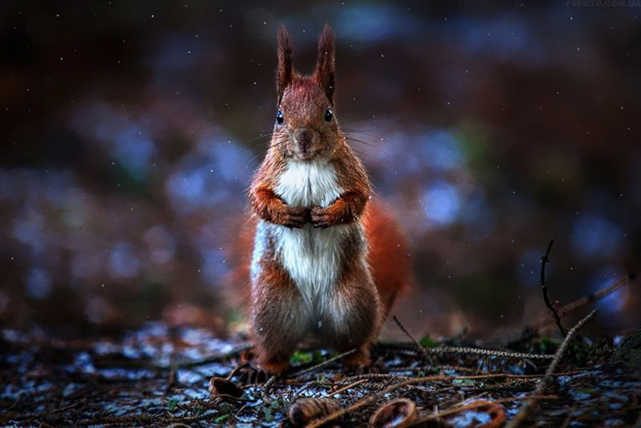 Photo : Sergey Polyushko / Animal Portraits